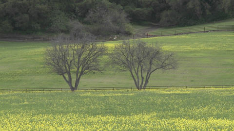 Zoom out on large trees and field of flowers during the spring in Ojai, California Footage