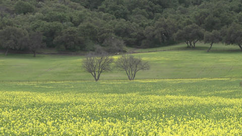 Zoom out on large trees and field of flowers during the... Stock Video Footage