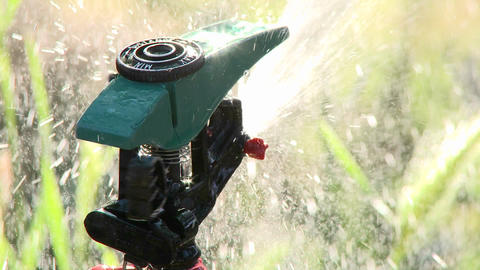 Close-up rack focus on a sprinkler spraying water in Oak... Stock Video Footage