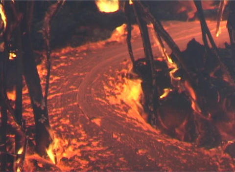 Lava flows through trees Stock Video Footage
