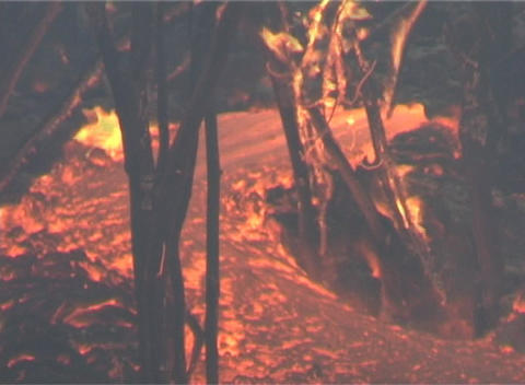 Flowing lava burns trees Stock Video Footage