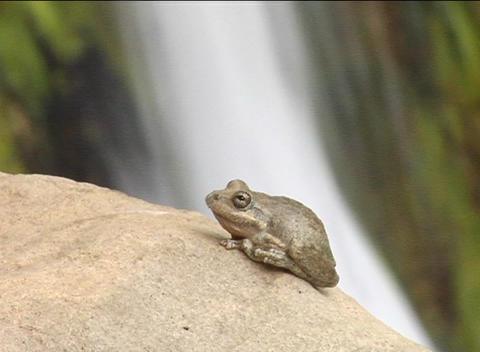 A small frog sits on a rock in front of a waterfall Stock Video Footage