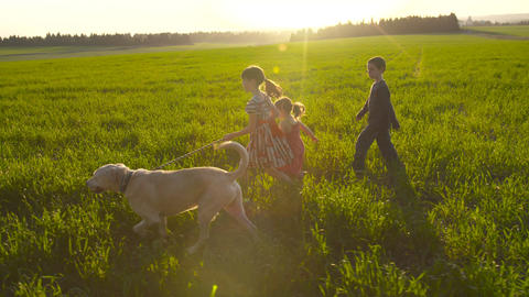 Three kids walking in a field during sunset with a white dog Footage
