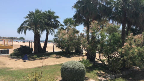 Cambrils, Spain, A group of palm trees next to a tree Live Action
