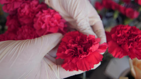 saleswoman shows stylish red carnation in floral shop Live Action