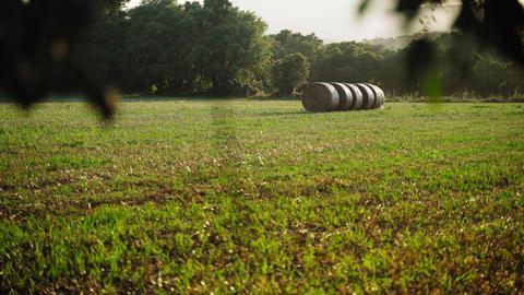 Footage of a beautiful mown field with haystacks. Round stacks in golden light Acción en vivo