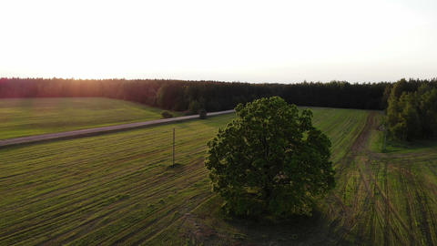 flying over beautiful country side landscape with field and trees, on sunset Live Action