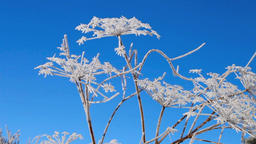 Rime swaying in wind, Yashima Wetlands, Nagano Prefecture, Japan ビデオ