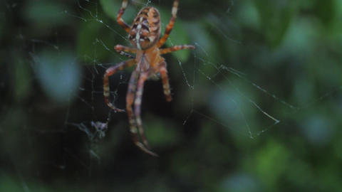 A close up of a spider ライブ動画