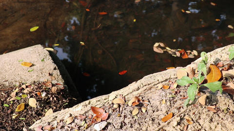 Autumn pond at the end of a concrete drainage pipe Live Action