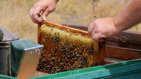 Honey Frame in the Beehive Live Action