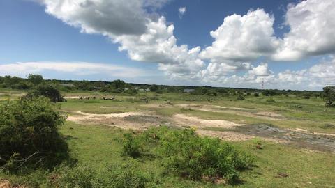 Yala, Sri Lanka, wild animals on the horizon part 3 Live Action