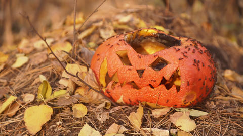 Wrinkled face of a festive pumpkin after Halloween in forest Live Action