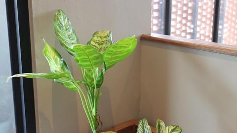 Indoors green leaves plant in air conditioned room Acción en vivo