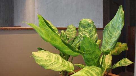 Nature green leaves plant in air conditioned room Acción en vivo