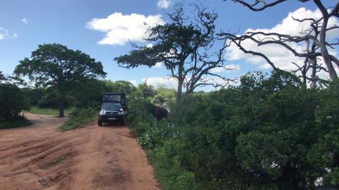 Yala, Sri Lanka, car stands in bushes Live Action