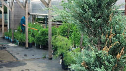 Caring for a garden center in summer Live Action