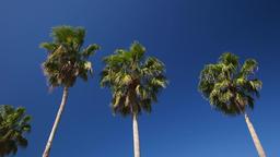 Palm trees and blue sky Footage