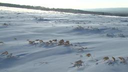 Snow field in Hokkaido, Japan Footage