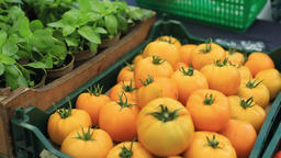 Outdoor farmers market with fresh produce Live Action