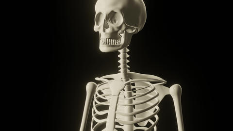 Zoom out of medical skeleton with bones names appearing Live Action