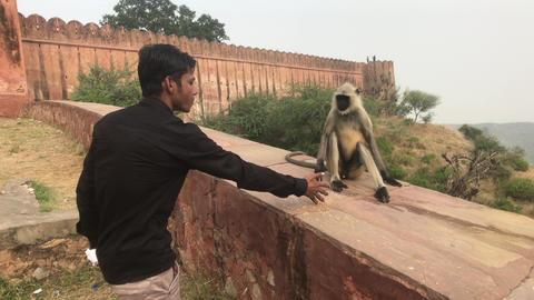Jaipur, India - November 03, 2019: Jaigarh Fort Tourist feeds monkey Live Action