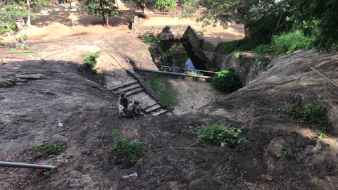 Mihintale, Sri Lanka, monkeys in mountainous territory Live Action