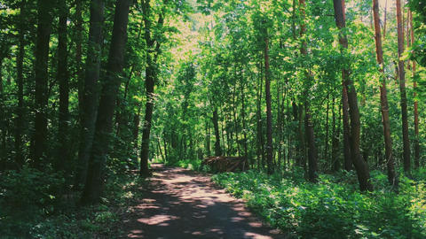 Pathway in woods on sunny day, hiking path in forest and walkway through green Live Action