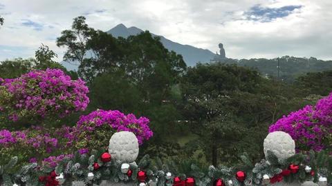Hong Kong, China, A close up of a flower garden Acción en vivo
