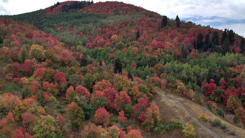 Aerial view flying over trees on hillside showing colorful trees Live Action
