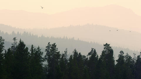 Seagulls flying in the sky over smokey forest layers Live Action