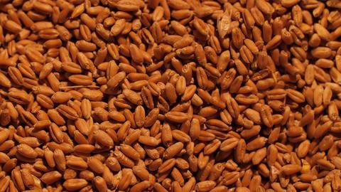 Grains of a wheat background Acción en vivo