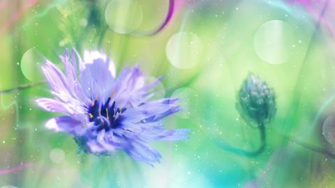 Colorful Floral Design Background Loop 애니메이션