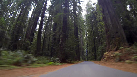 Driving Through Redwood Trees Footage