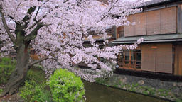 Cherry blossoms and traditional Japanese house, Kyoto, Japan Footage
