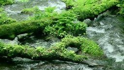 Clear water stream Footage