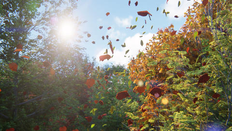 Autumn leaves fall from trees in autumn Park. Autumn colorful Park on a Sunny day Animation