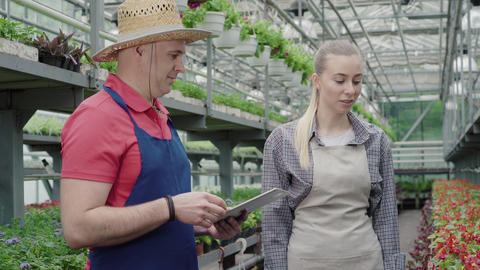 Young pretty woman taking pot with red flower in greenhouse and talking to mid Live Action