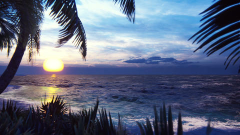 Branches of palm trees and tropical plants in the wind on the background of a beautiful sunset. Animation