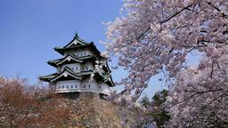 Cherry blossoms at Hirosaki Castle, Aomori Prefecture, Japan Footage