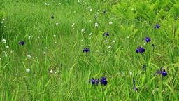 Flower field, Hokkaido, Japan Footage