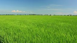 Rice field in Akita Prefecture, Japan Footage