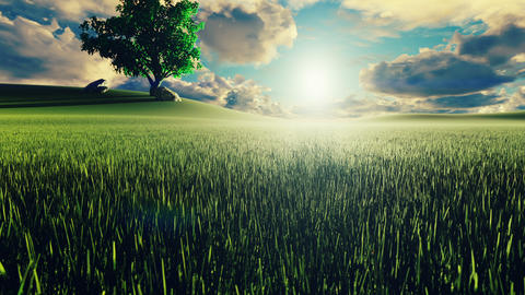 Mystical and fascinating video of morning green grass, tree on the background, morning sun and Animation