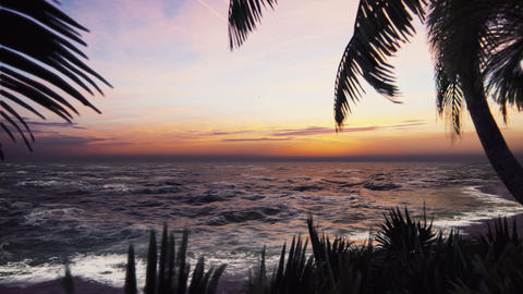 Branches of palm trees and tropical plants in the wind at sunset. Beautiful summer loop background Animation