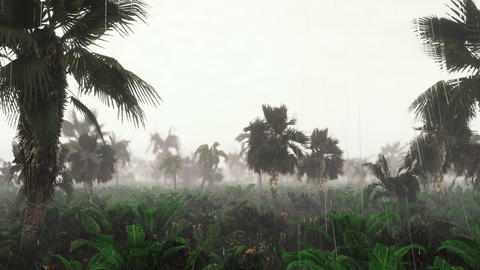 Green jungle during tropical rain. Green jungle trees and palm trees, fog and tropic rain. The Animation