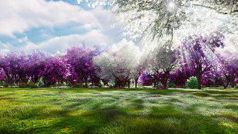 Sakura blooms in spring on the background of beautiful trees and fields of flowers. Travel and Animation
