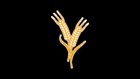 Agriculture wheat animation CG動画