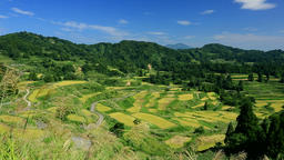 Hoshitoge Rice Fields, Niigata Prefecture, Japan Footage