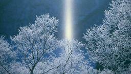 Rimed and snow, Hokkaido, Japan ภาพวิดีโอ
