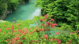 Mountain stream, Akita Prefecture, Japan Footage
